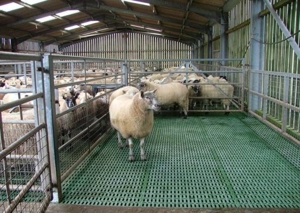 ODonovan Engineering Sheep Housing Equipment