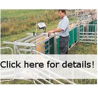 Sheep Handling Prattley