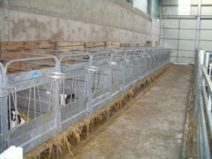 Calf Pens with plastic slat