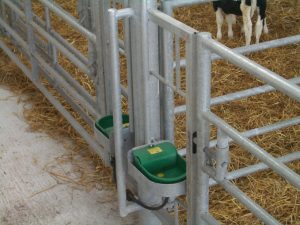 Calf Group Penning