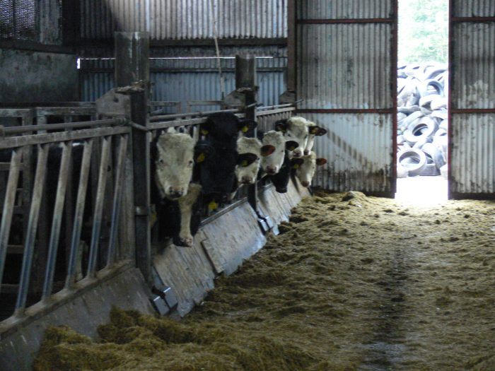 Cow Pow Moving Feed Barrier