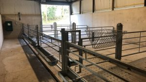 Calf Investment Scheme