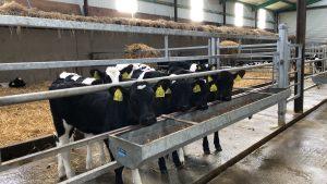 Calf feed Trough
