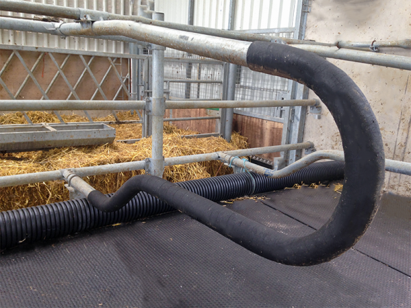 cow cubicle