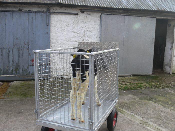 Calf Transporter