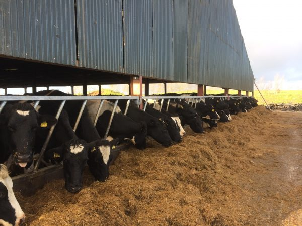 Diagonal Feed Barrier