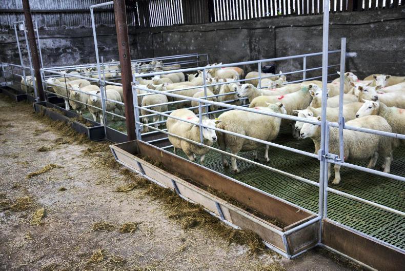 MIK Stepper Sheep Slats