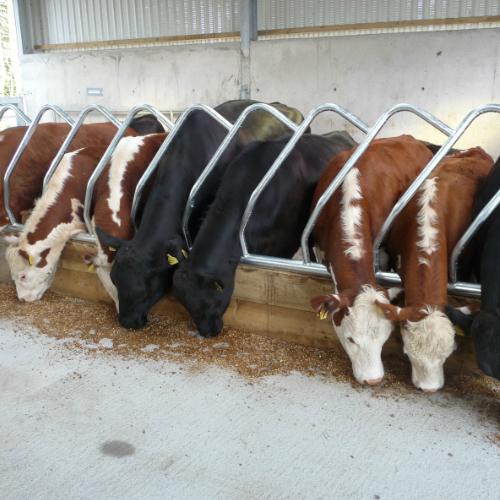 cattle feed barrier design