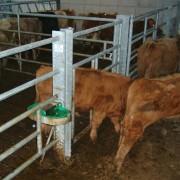 Creep gate calf
