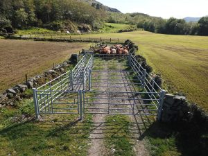 Fixed Cattle Crush