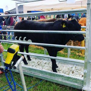 ODEL Mobile Cattle Crush