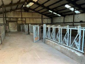 Head Locking Stalls
