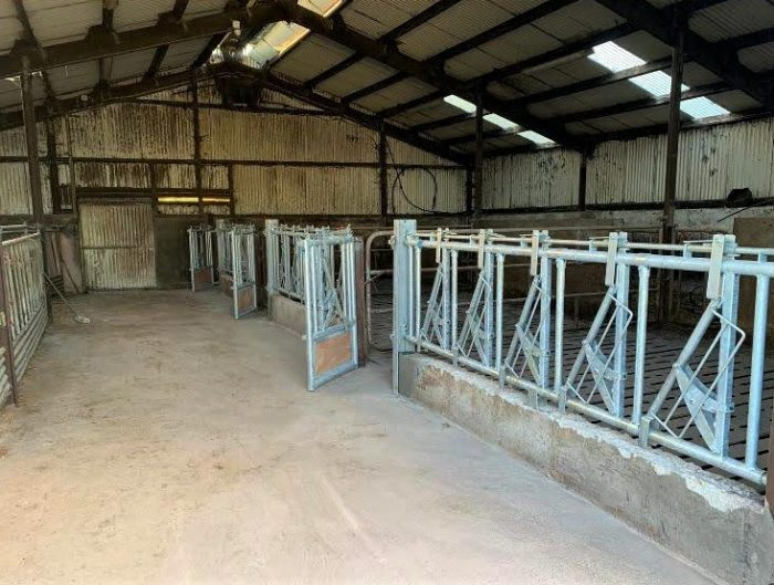 Head Locking Stalls