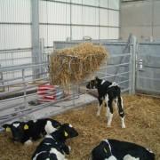 calf-product-img-25