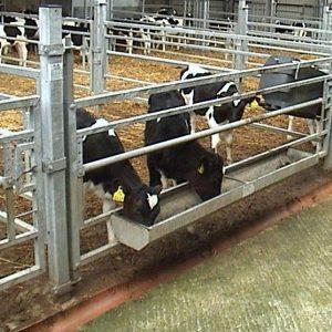 calf-product-img-29