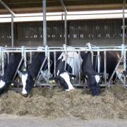 calf-product-img-48