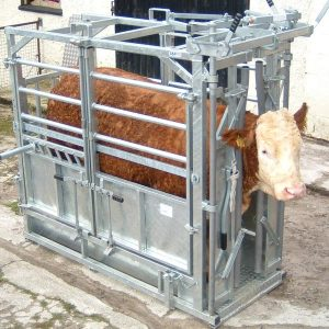 cattle-product-img-26