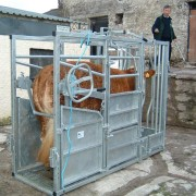 cattle-product-img-28