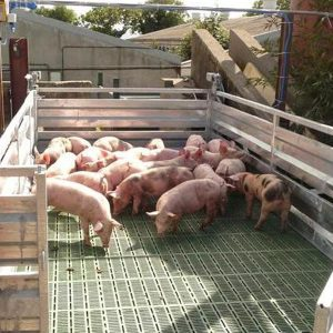 Pig Batch Weigher