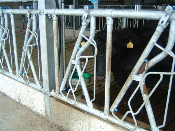 Head Locking Barrier