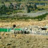 Prattley Sheep Handling Yards