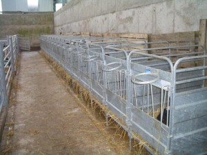 Calf Pen New reduced 2