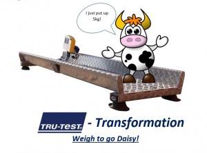 tt transformation