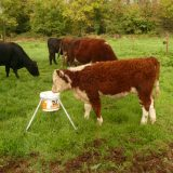 Mineral Lick Stand