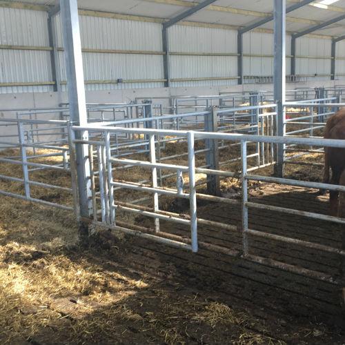 Beef Cattle Housing