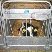 Calf Pen New reduced 3