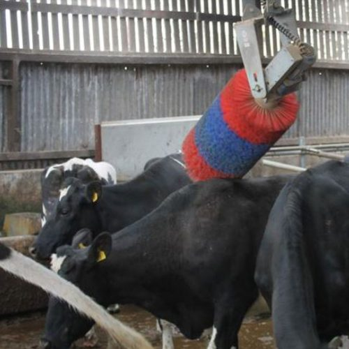 Automatic Swinging Cow Brush