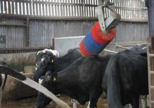 Automatic Swinging Cow Brush