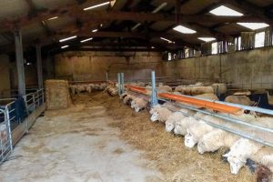 Sheep Feed Barriers