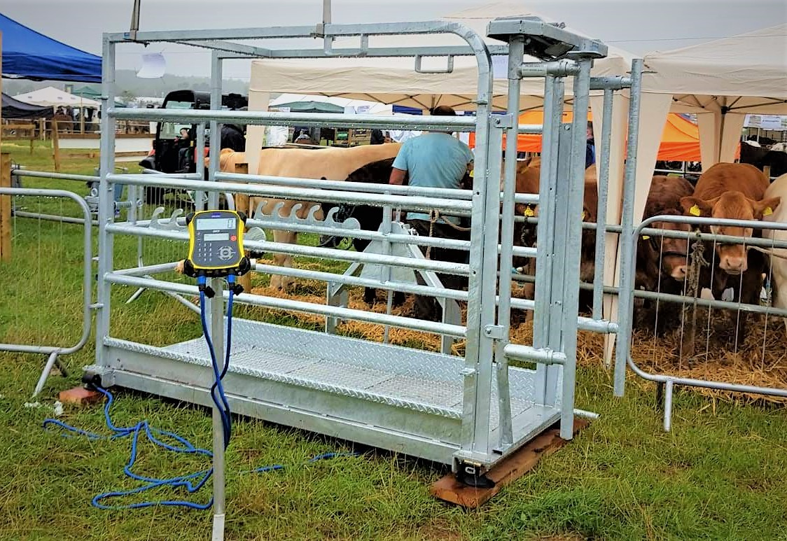 Cattle Weigh Crate