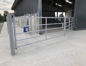 beef cattle housing