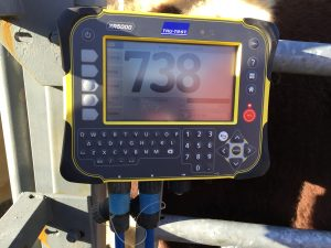 TruTest Weighing Indicators
