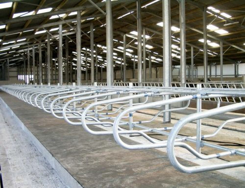 Cow Cubicles – What Are Your Mounting Options