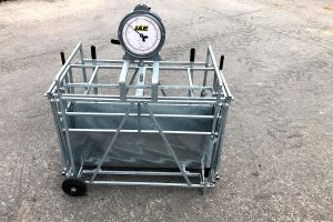 lamb weigher