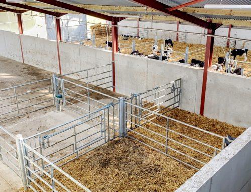 New Parlour Development, Calf & Calving Setup